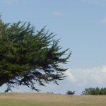 Saint-briac golf (5)