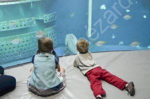 aquarium (3)